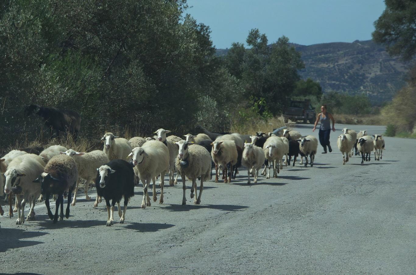 Cesta do vesnice Zaros