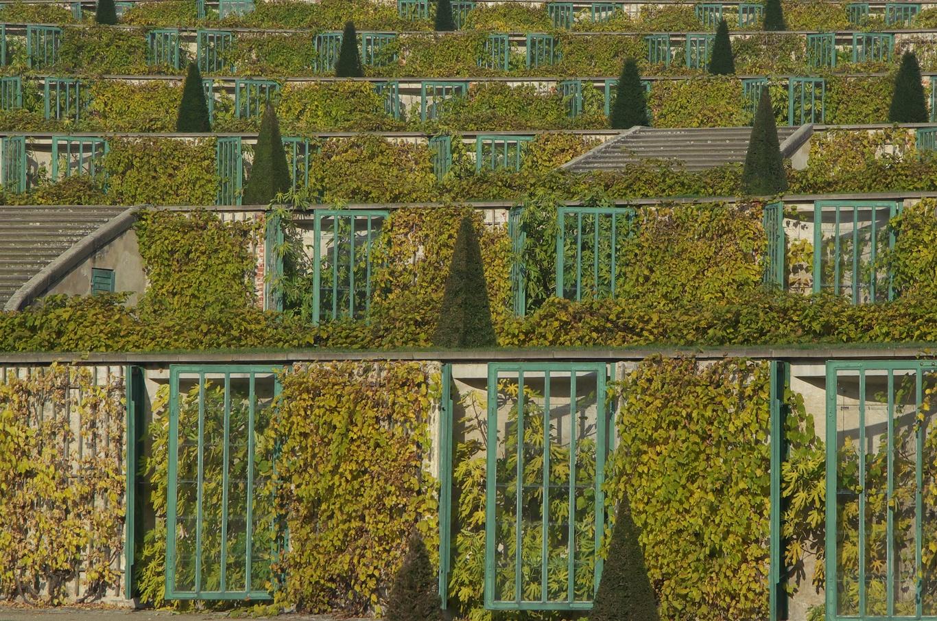 Zámek Sanssouci, terasy