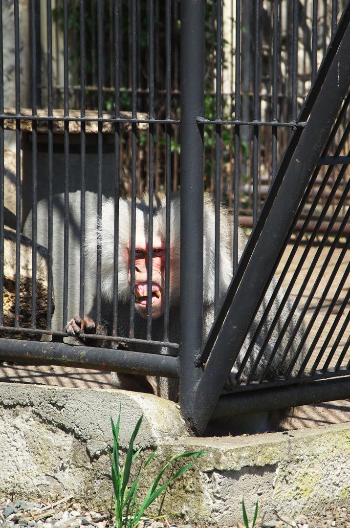Roztomilá opička, Podzámecká zahrada, Kroměříž