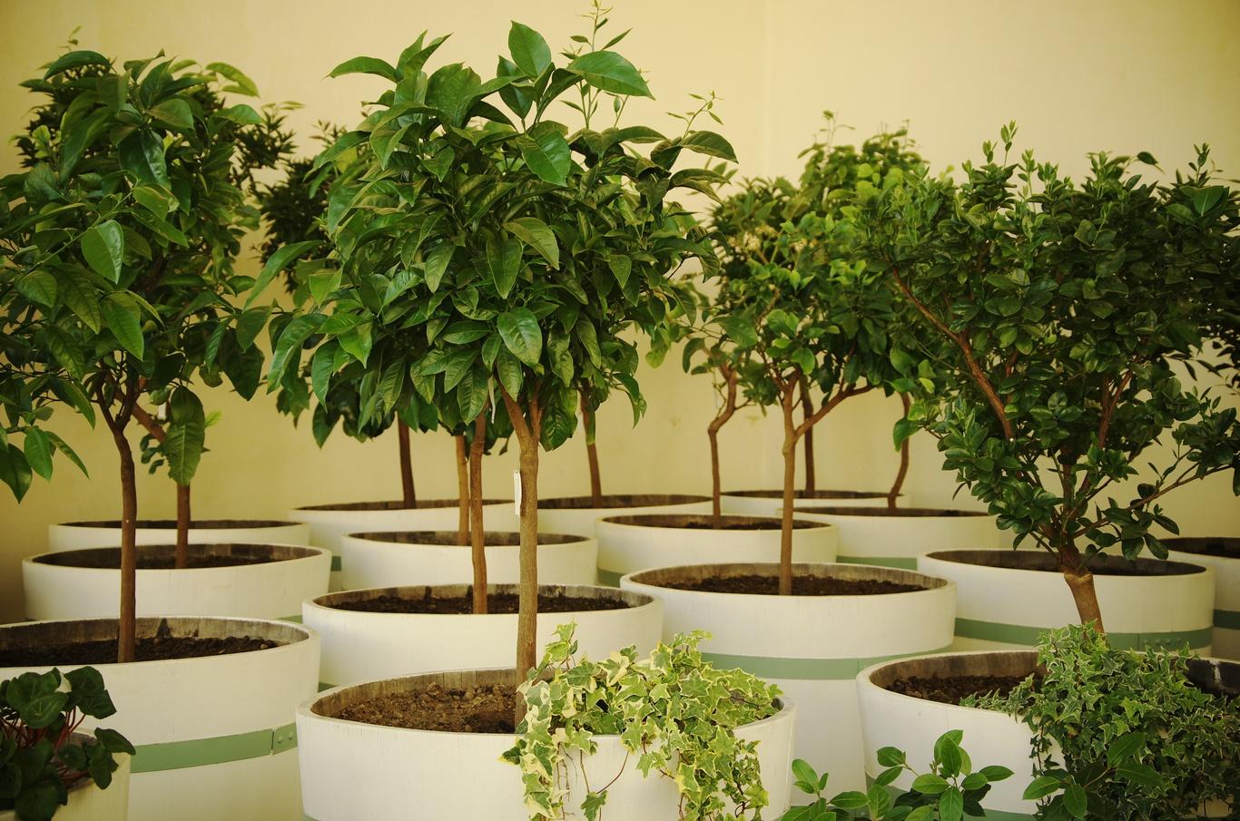 Palmový skleník, Květná zahrada, Kroměříž