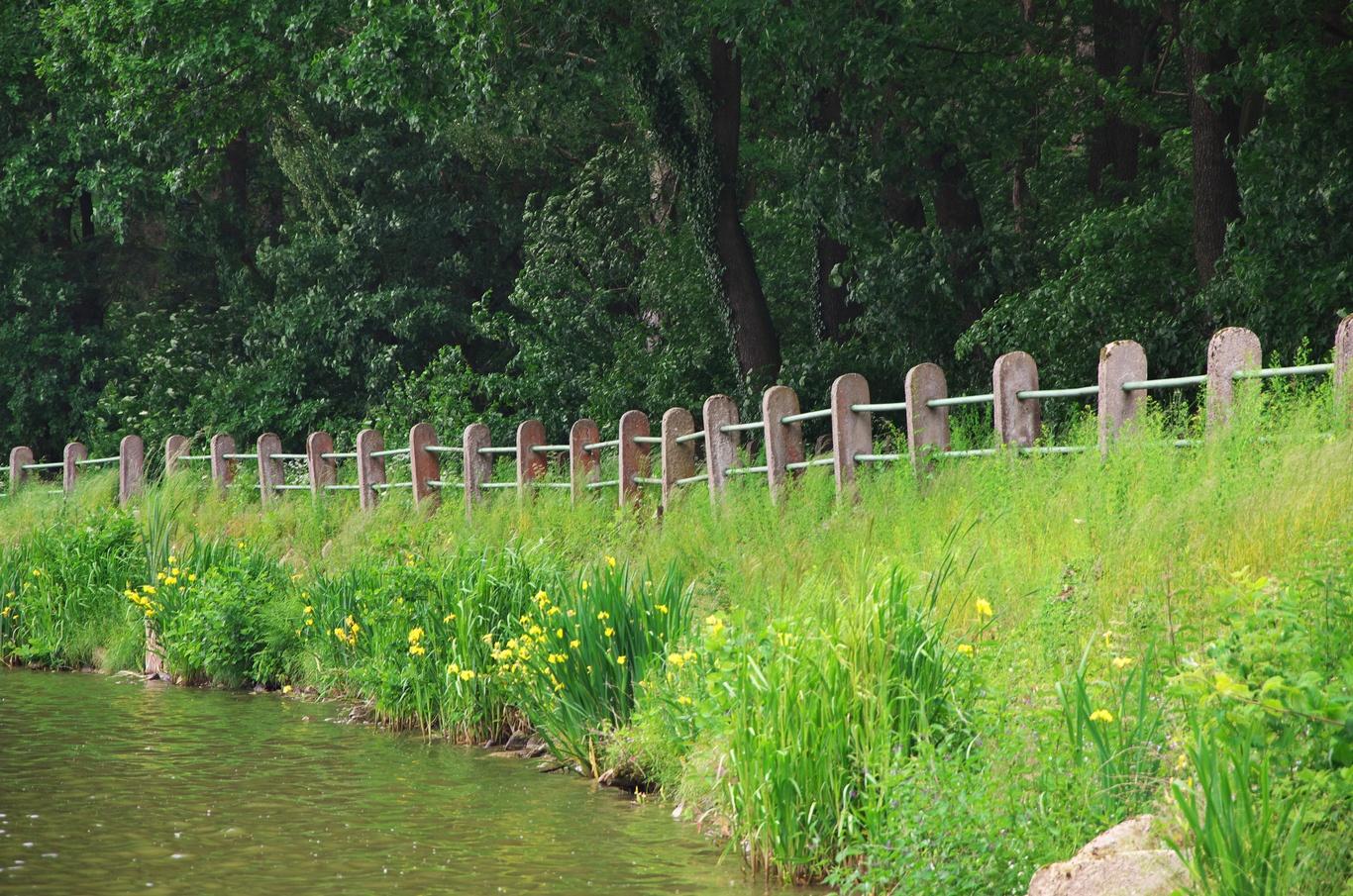 NS Voděradské bučiny, Vyžlovský rybník