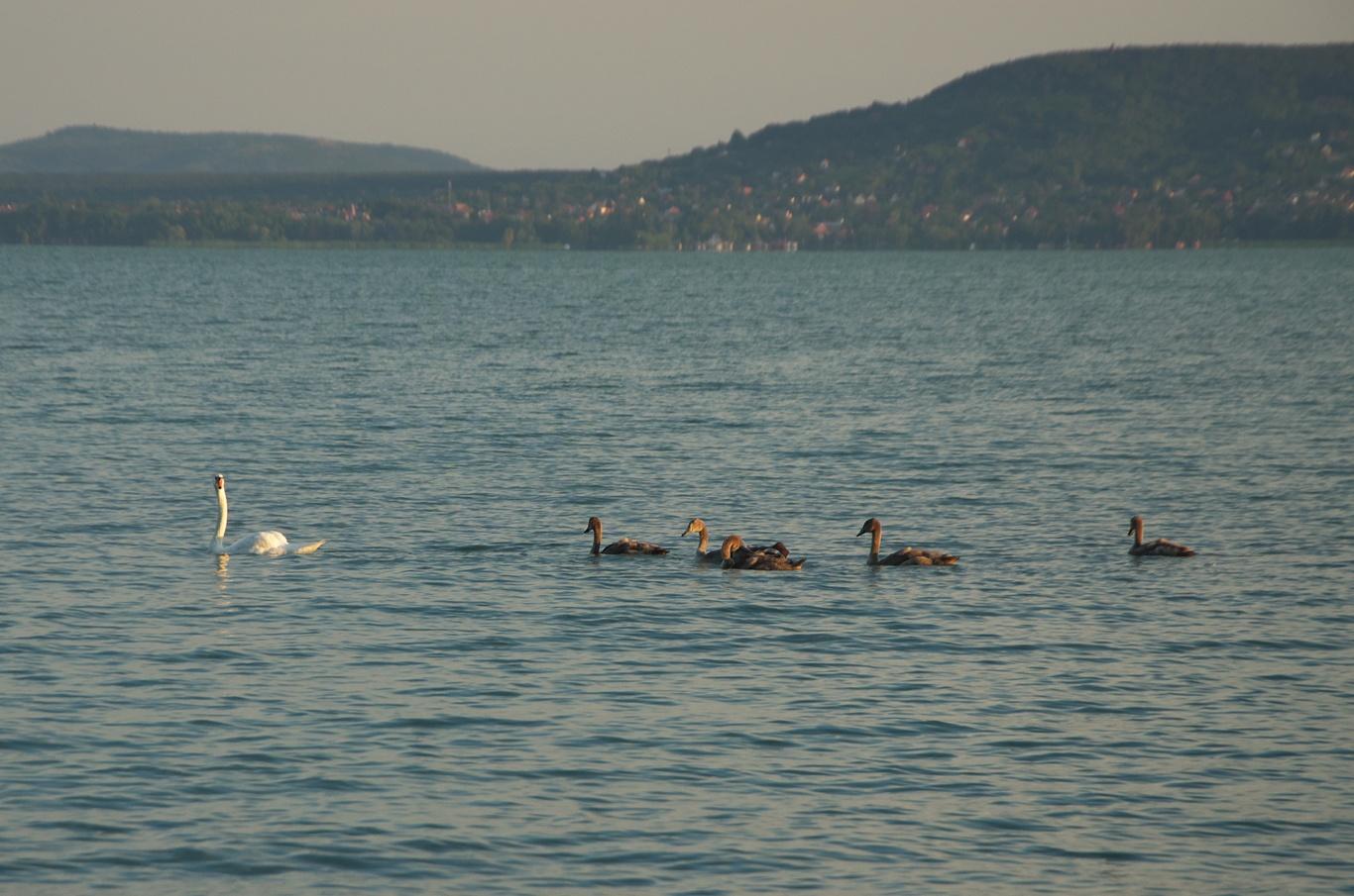 Brzké ráno, lidi nikde, zato bylo k vidění všelijaké ptactvo.