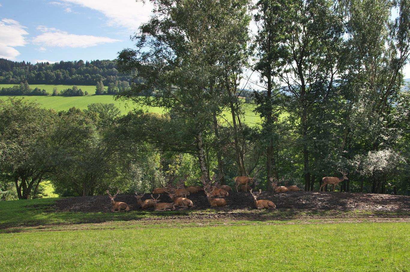 Jelení farma Krásná vyhlídka