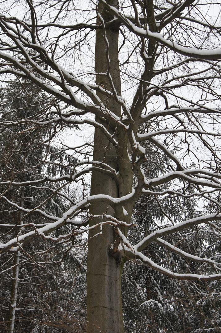 Zajímavý strom