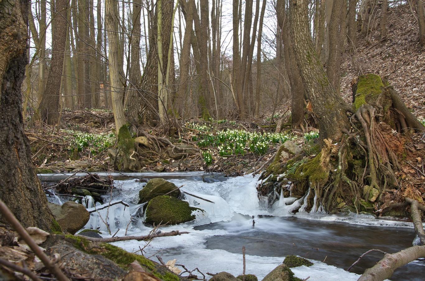 Údolí Chlébského potoka