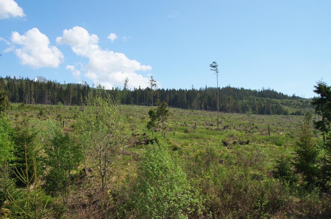 Svahy Tater jsou po vichřici, která se horami prohnala v roce 2004, stále bez stromů.