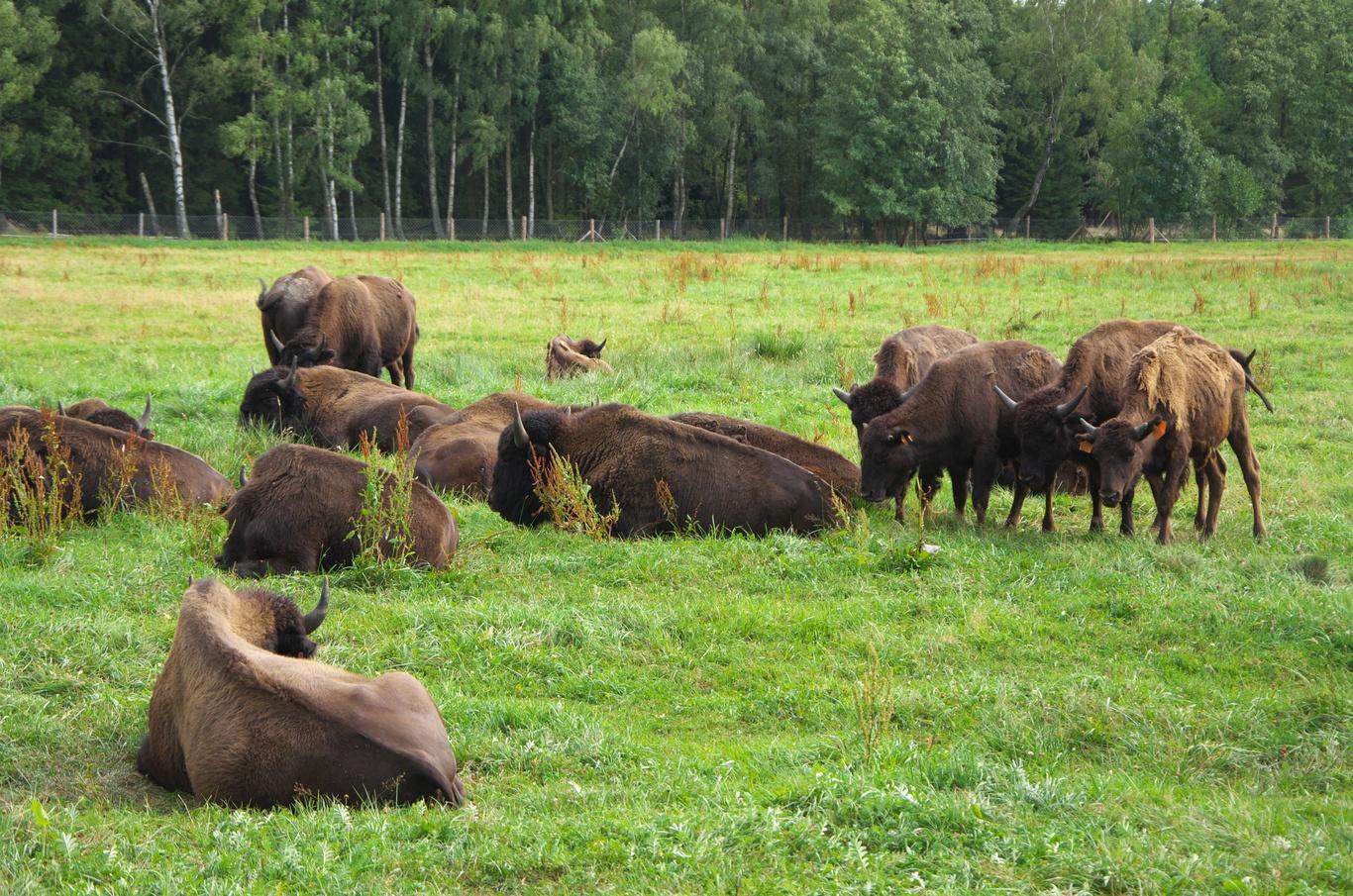 Bizoní farma Rožnov