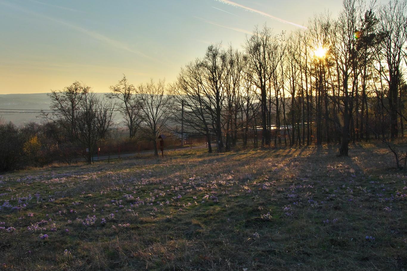 Přírodní rezervace Kamenný vrch