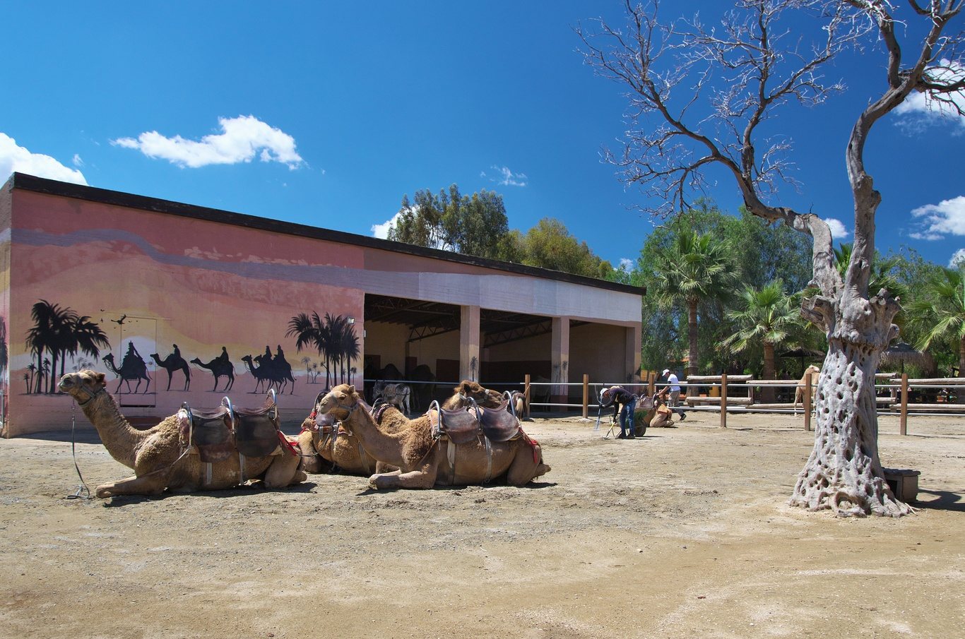 Camel Park Mazotos