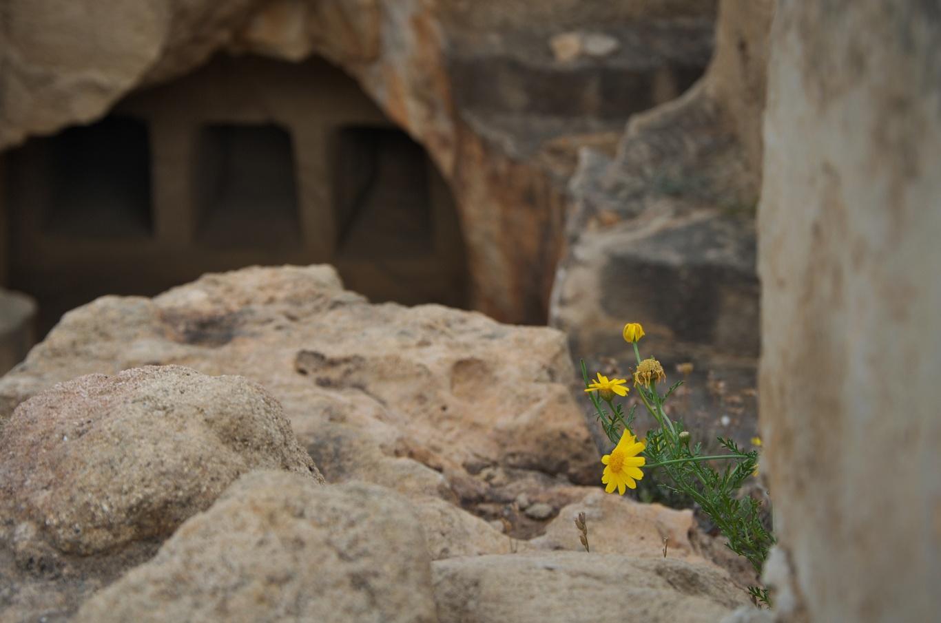 Archeologické naleziště Hrobky králů