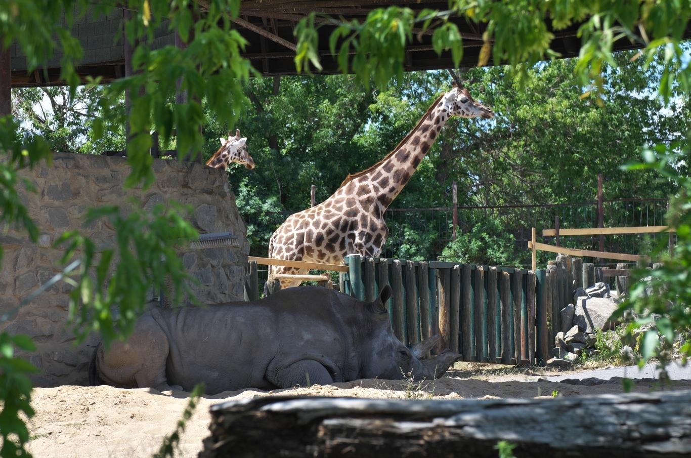 ZOO Ústí nad Labem,  žirafa, Zamba