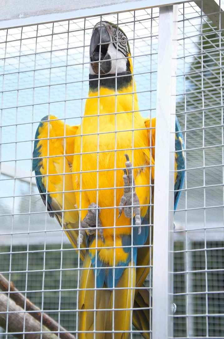 Zoopark Na Hrádečku, ara