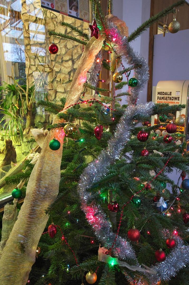 ZOO Wrocław, terarijní pavilon a jeho svérázná vánoční výzdoba