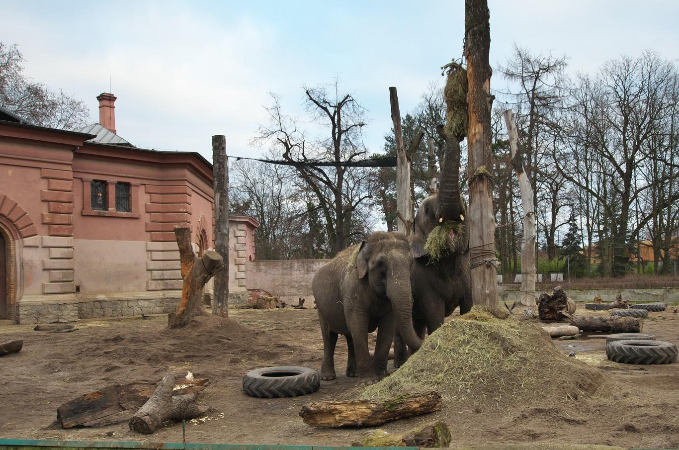 ZOO Wrocław, slon