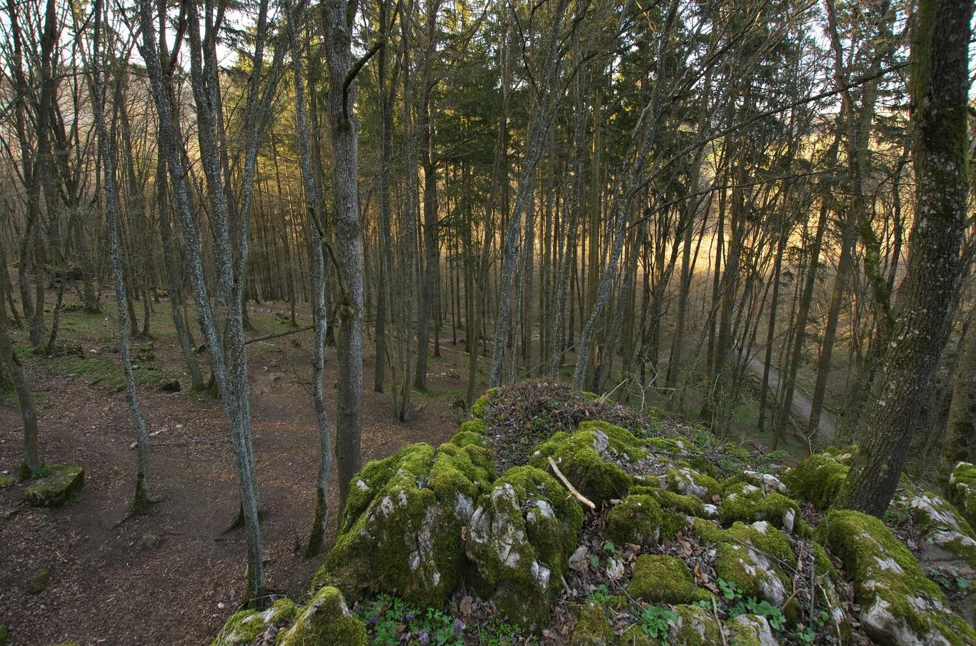 Pohled od jeskyně