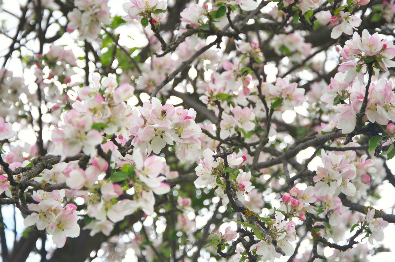 Jaro v Litovli